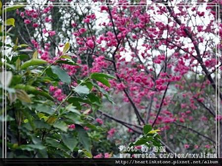 2010春節記實(四22