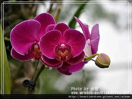 2010春節記實(四25