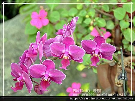 2010春節記實(四28