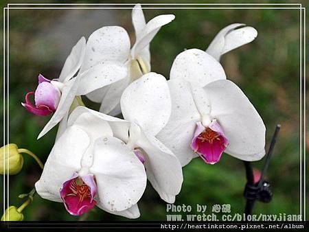 2010春節記實(四29