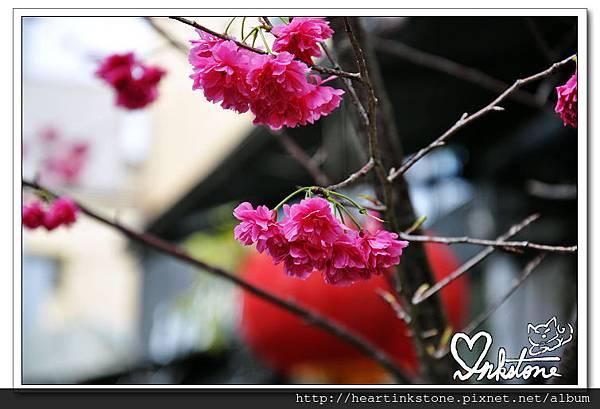 nEO_IMG_DSC_0013.jpg