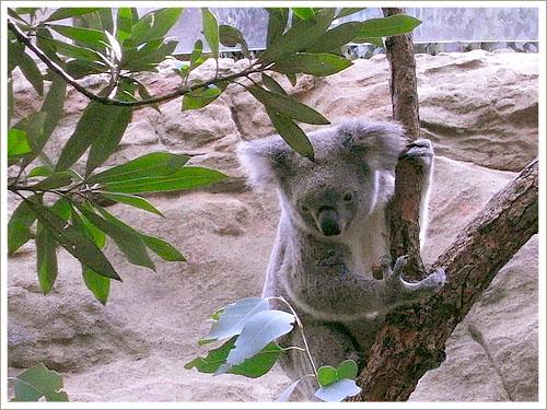Sydney-wild world-01.jpg
