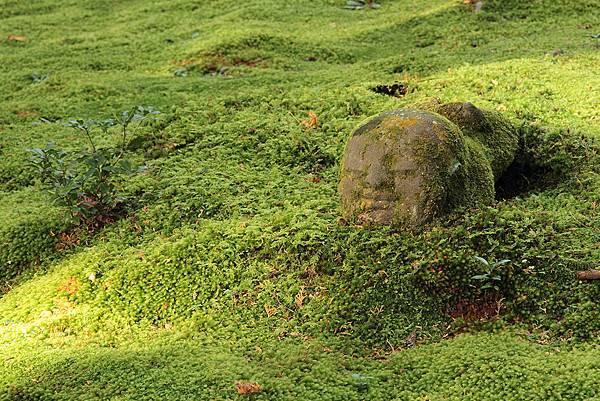 2011-京都之旅-三千院-躲起來的小沙彌-02.jpg