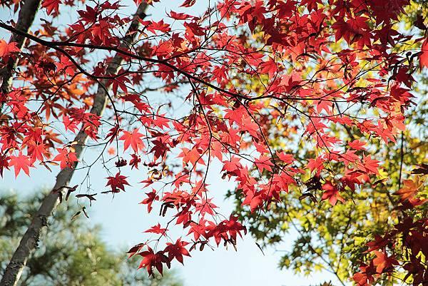 2011-京都之旅-第五天-慈照寺-11.jpg
