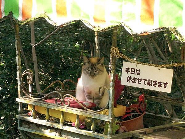 2011-京都之旅-第五天-哲學之道-03.jpg