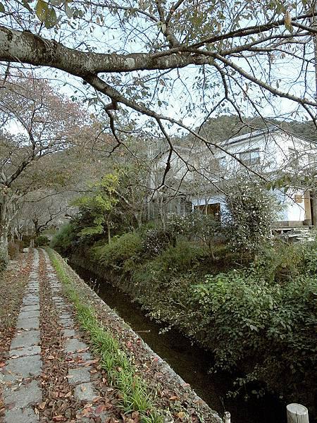 2011-京都之旅-第五天-哲學之道-02.jpg
