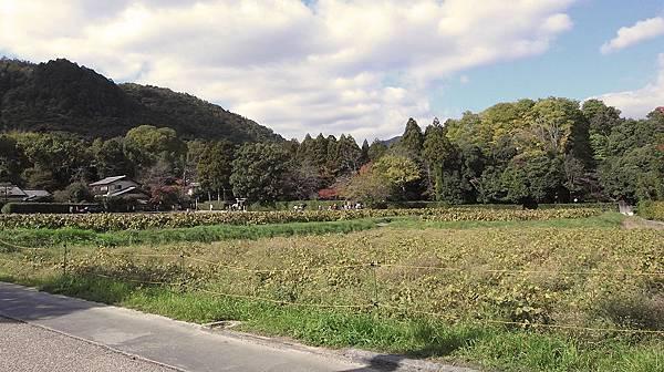 2011-京都之旅-第六天-嵯峨野 嵐山-02.jpg