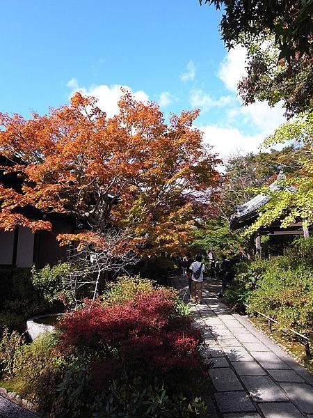 2011-京都之旅-第六天-嵯峨野 嵐山-常極光寺-03.jpg