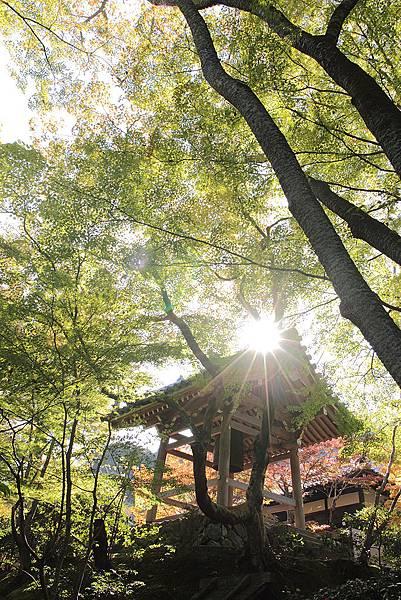 2011-京都之旅-第六天-嵯峨野 嵐山-常極光寺-10.jpg