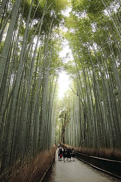 2011-京都之旅-第六天-嵯峨野 嵐山-竹林-01.jpg