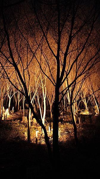 2011-京都之旅-第七天-夜訪清水寺-11.jpg