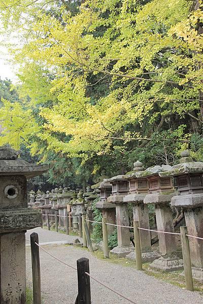 2011-京都之旅-第八天-春日大社-06.jpg