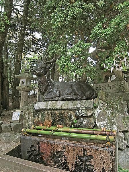 2011-京都之旅-第八天-春日大社 許願池.jpg