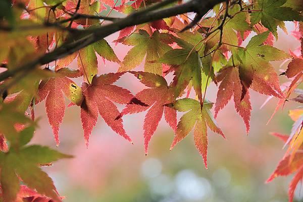 2011-京都之旅-第八天-野鹿公園-07.jpg