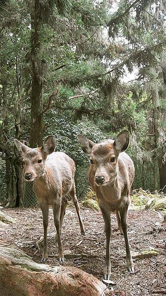 2011-京都之旅-第八天-野鹿公園-01.jpg