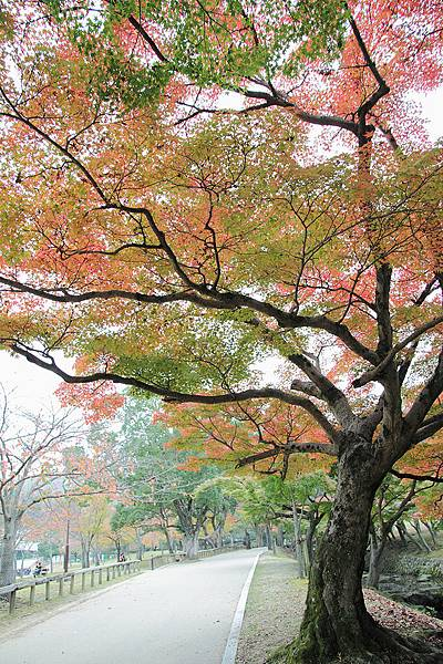 2011-京都之旅-第八天-野鹿公園-06.jpg