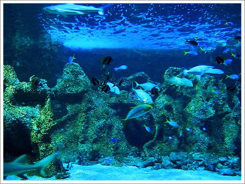 Sydney-Aquarium-04.jpg