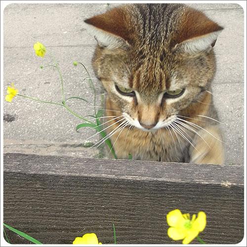 貝希特斯加登-路邊小貓-01.jpg