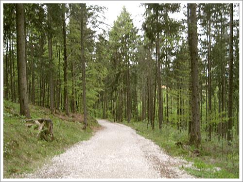 新天鵝堡-森林迷途.jpg