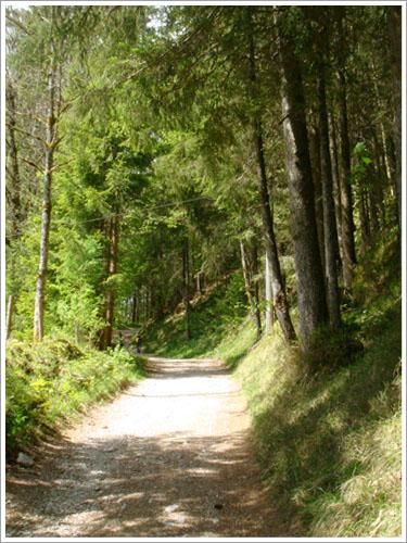 貝希特斯加登-魔法森林-06.jpg