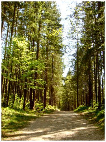 貝希特斯加登-魔法森林-07.jpg