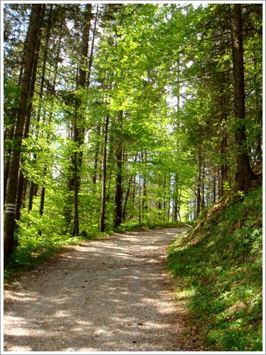 貝希特斯加登-魔法森林-08.jpg