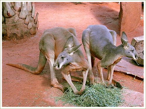 Sydney-wild world-02.jpg