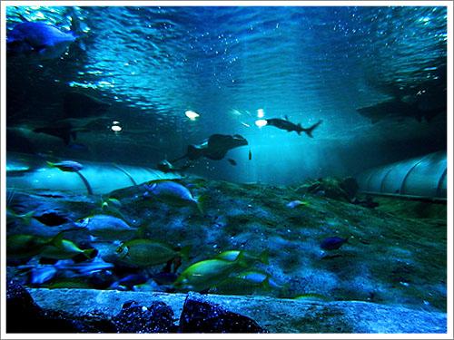 Sydney-Aquarium-03.jpg