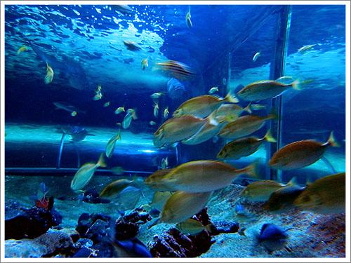 Sydney-Aquarium-01.jpg