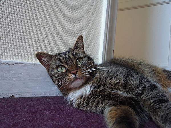 le chat de paul