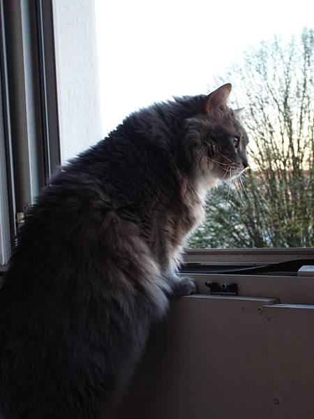 le chat de amandine