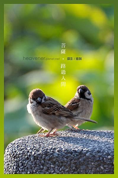 台北植物園‧攝/塵襲
