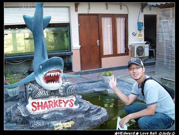 我也跟鯊魚來一張
