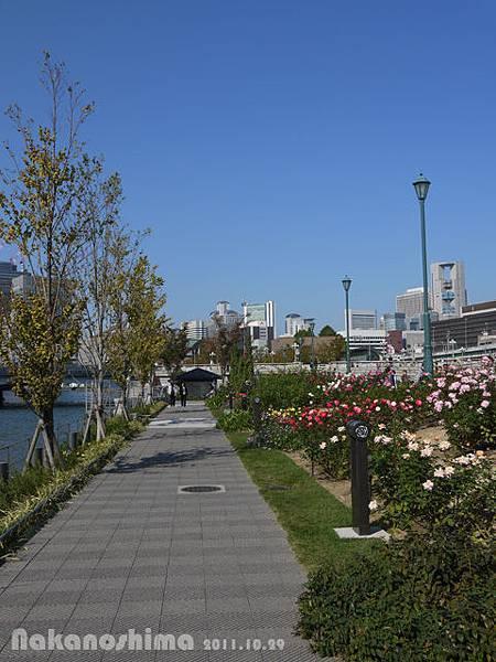 中之島公園 玫瑰園走道