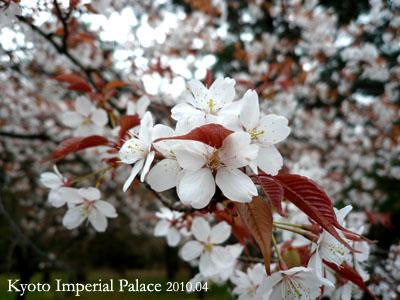 京都御所 2010年春季對外開放