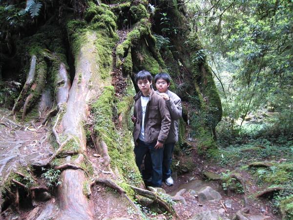 神木樹洞合照