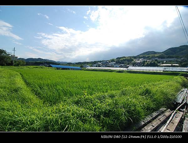 DSC_7126.jpg
