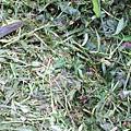 看得到銀藍色的小蜥蜴嗎?