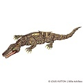 Louis_Vuitton_Billie_Achilleos_Crocodile.jpeg