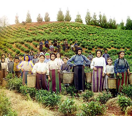 http://en.wikipedia.org/wiki/File:Group_of_workers_harvesting_tea_Chakva_Prokudin-Gorsky.jpg