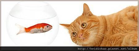 2521-cat--fish