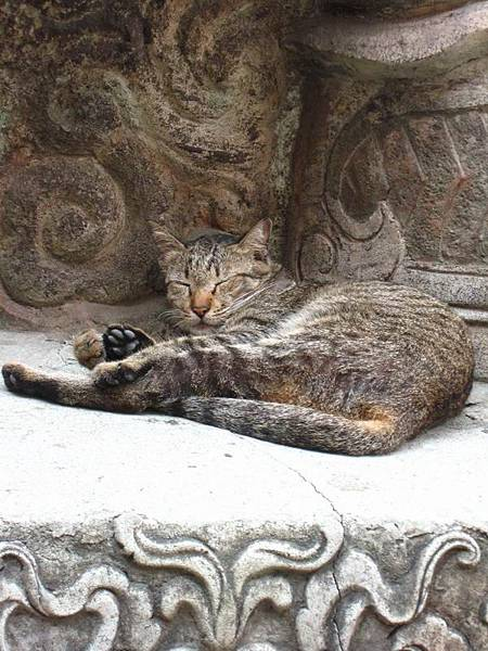 065寺廟裡的貓.JPG