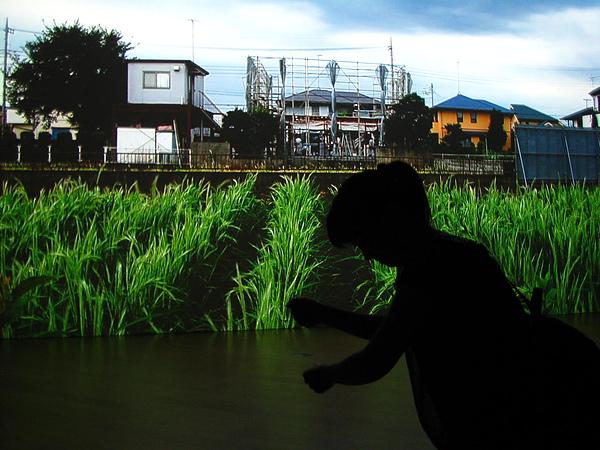 IMG_4994辛勤種田的剪影.JPG