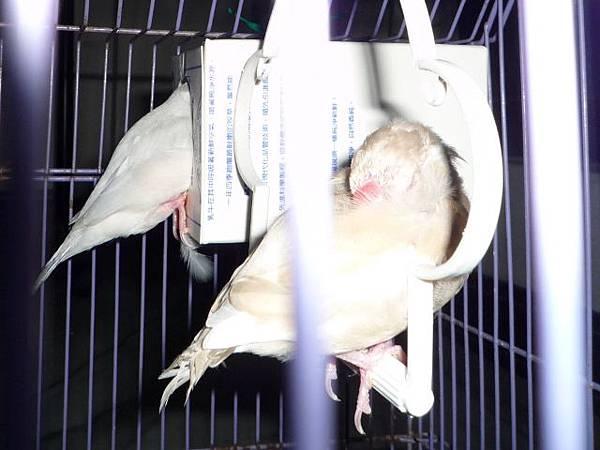 P1020332銀文躲鳥屋