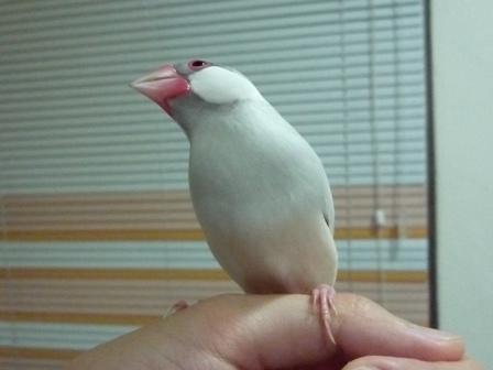 仰天假鳥.jpg