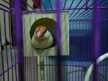 紅文鳥屋3.jpg