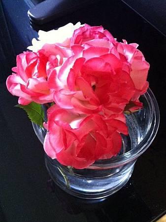 玫瑰 1.JPG