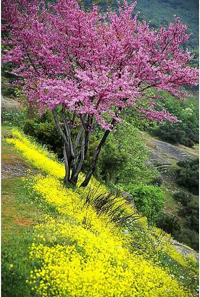 希臘 美堤歐拉山谷