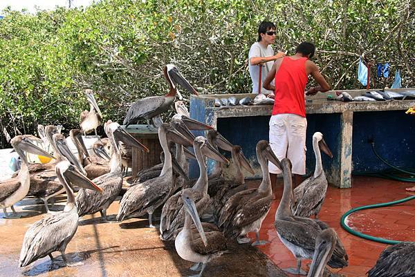 加拉巴哥群島 魚市