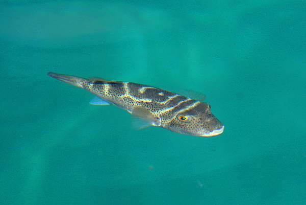 加拉巴哥群島 海中魚